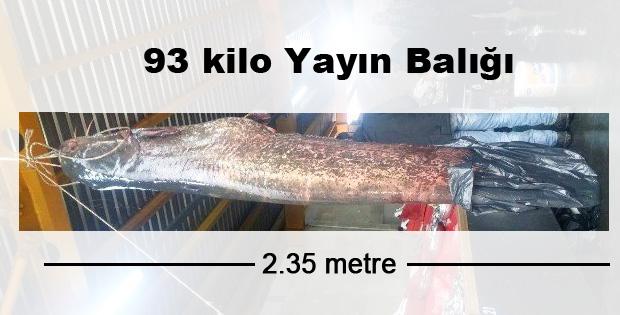 93 Kiloluk Yayın Balığı Olurmu