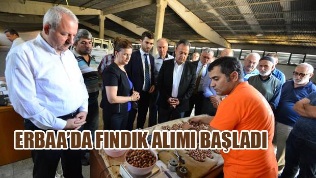 ERBAA'DA FINDIK ALIMI BAŞLADI