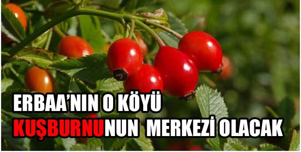 Erbaa'da BİN 500 Adet Kuşburnu Fidanı Dikilecek-10809