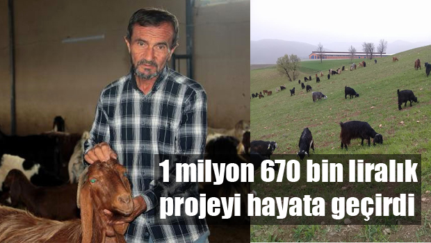 Hibeyle Kurduğu İşletmede Keçi Eti ve Sütü Üretiyor