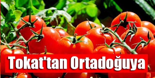 Tokat'tan Ortdadoğuya Domates İhracatı-10446