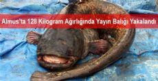 128 Kilogram Ağırlığında Yayın Balığı Yakalandı