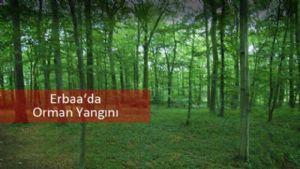 Erbaa'da Orman Yangını Kontrol Altına Alındı