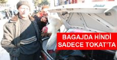 Bagaj'da Hindi Satışı Başladı