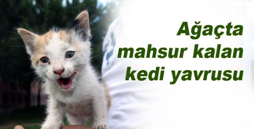Bir Kedi Kurtarma Operasyonuda Erbaa'dan