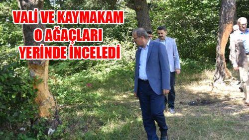 Erbaa'da Çam Ağaçlarına Zarar Verilmesi