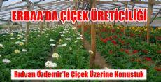 Erbaa'da Çiçek Yetiştiriciliği