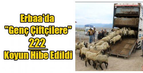 Erbaa'da Genç Çiftçilere Koyun Hibe Edildi