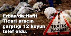 Erbaa'da Hafif Ticari aracın çarptığı sürüde 12 koyun telef oldu.