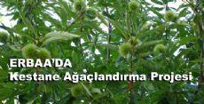 Erbaa'da Kestane Ağaçlandırma Projesi