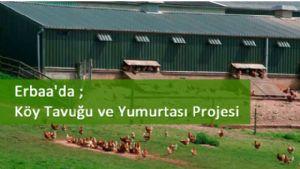 Erbaa'da ''Köy Tavuğu ve Yumurtası Projesi''