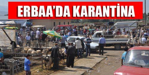 Erbaa'da Koyun Keçi Vebası Pazarı Kapattırdı
