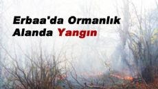 Erbaa'da Ormanlık Alanda Yangın
