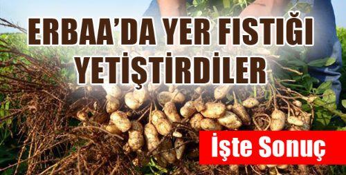 Erbaa'da Yer Fıstığı Üretimi Projesi
