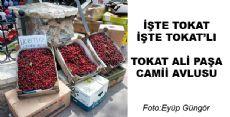 Günün Fotoğrafı Tokat'tan