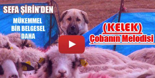 Kelek : Çobanın Melodisi  YAYINDA