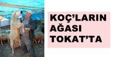 Koç'ların Ağası Tokatt'ta