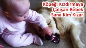 Köpeği Kızdırmaya Çalışan Bebek