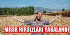 MISIR HIRSIZLARI YAKAYI ELEVERDİ
