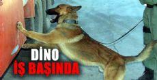 Narkotik Köpeği Dino İş Başnda