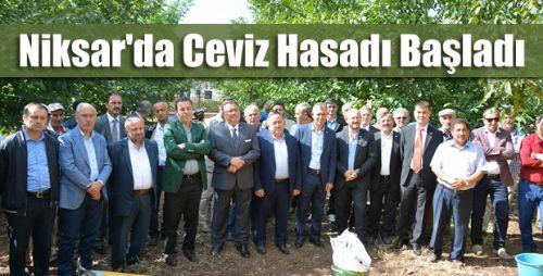 Niksar'da Ceviz Hasadı Programı Düzenlendi