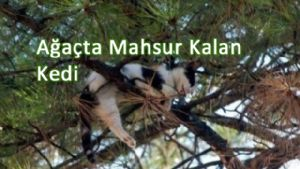 Tokat'ta Ağaçta Mahsur Kalan Kediyi İtfaiye Kurtardı