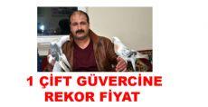 Tokat'ta Araba Fiyatına Güvercin Satıldı