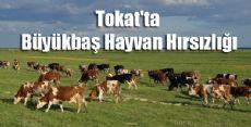 Tokat'ta Büyükbaş Hayvan Hırsızlığı