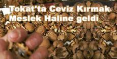 Tokat'ta Ceviz Kırmak Meslek Haline Geldi