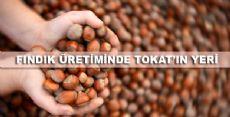 Tokat'ta Kaç Ton Fındık Üretiliyor?