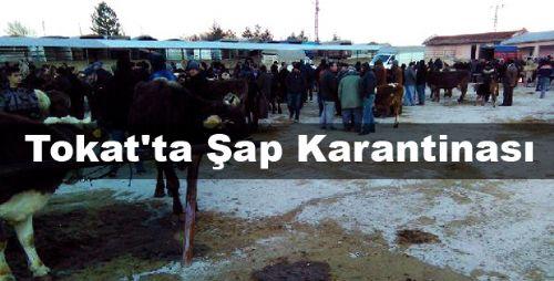 Tokat'ta Şap Karantinası