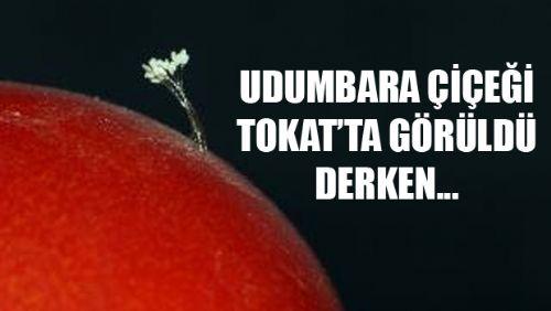 Tokat'ta Udumbara Çiçeği Görüldü Derken...