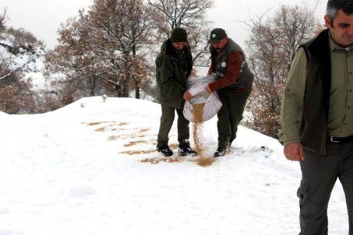 Tokat'ta Yaban Hayvanları İçin Doğaya 4 Ton Yem Bırakıldı