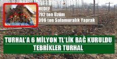Turhal'da Bin 800 Dekarlık Modern Bağ Tesisi Kuruldu