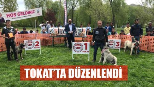 Türk Çoban Köpekleri Festivali 2019